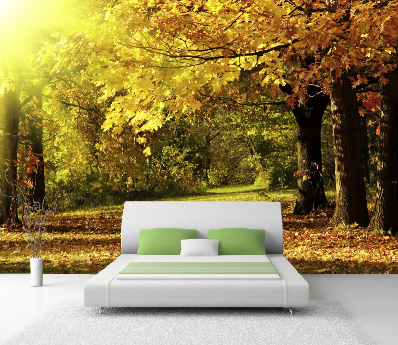 Selbstklebende Tapete Vlies : XXL Poster Fototapete Tapete Vlies Natur Wald im Herbst selbstklebend
