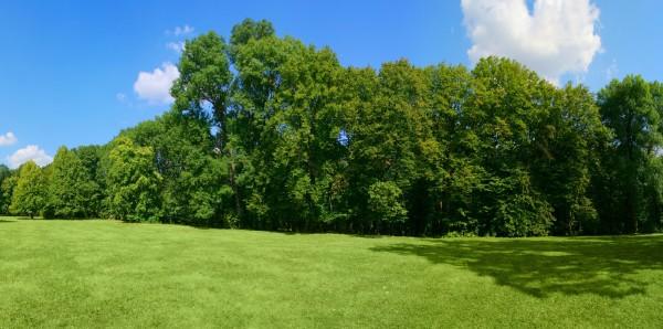Magnettafel Pinnwand XXL Magnetbild Sommer Wiese Wald grün