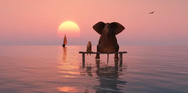 Magnettafel Pinnwand Bild Segelboot Elefant Freundschaft Hund