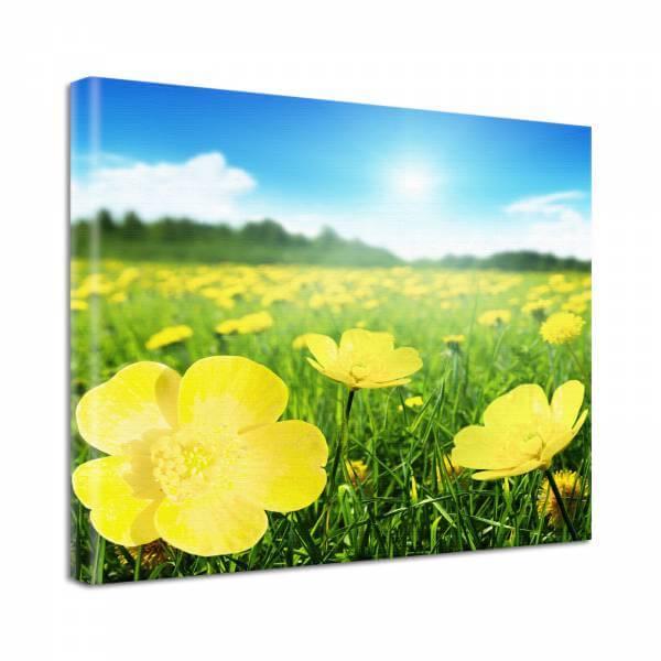 Leinwand Bild Natur & Blumen Butterblümchen im Sommerhimmel
