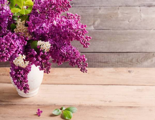 Leinwand Bild edel Blumen lila Frühlingsflieder im Strauß auf Holz