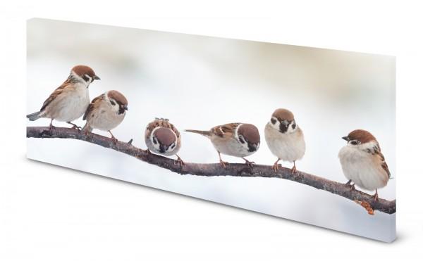 Magnettafel Pinnwand Bild Vögel Spatzen Sperling gekantet