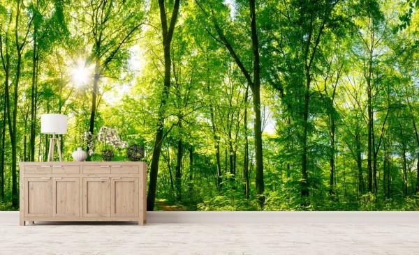 Vlies Tapete Poster XXL Fototapete Natur Wald Lichtung Bäume