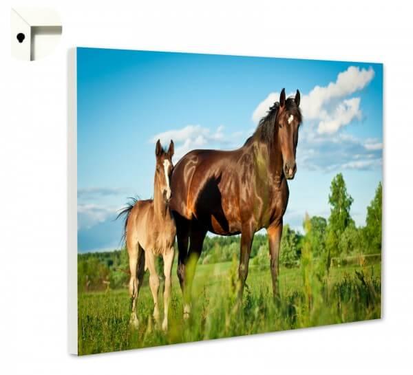 Magnettafel Pinnwand Memoboard Motiv Pferd Stute Fohlen