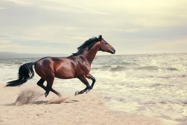 Magnettafel Pinnwand XXL Bild Pferd Meer Strand Galopp