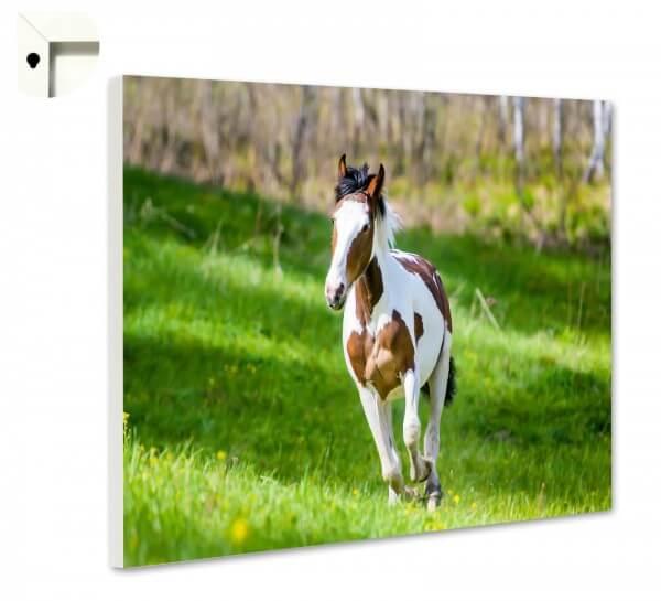 Magnettafel Pinnwand Tiere Pferd Schecke Fohlen