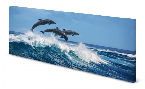 Magnettafel Pinnwand Bild Delfine Ozean gekantet