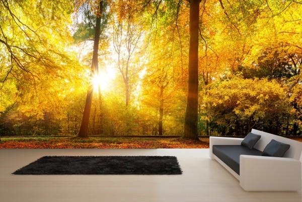 Vlies Tapete Poster XXL Fototapete Natur Herbst Wald