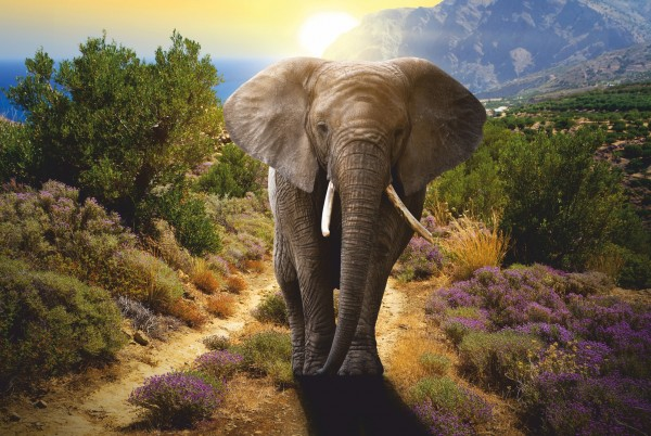 Magnettafel Pinnwand XXL Bild Elefant Bulle