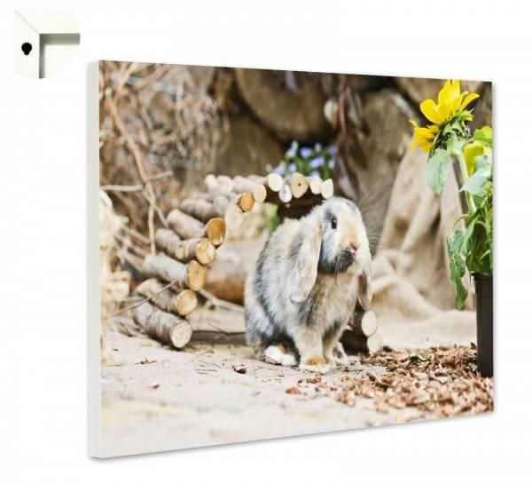 Magnettafel Pinnwand Memoboard Tiere Kaninchen