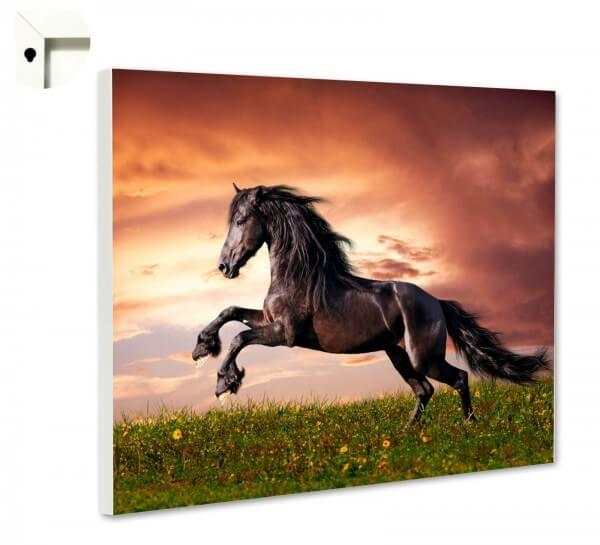 Magnettafel Pinnwand Pferd wild