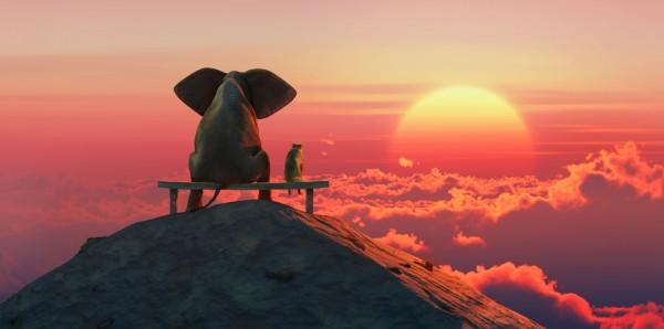 Magnettafel Pinnwand Bild Elefant Hund Freunde Sonnenaufgang