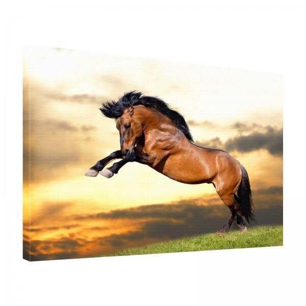 Leinwand Bild edel Tiere Pferd in braun steigend