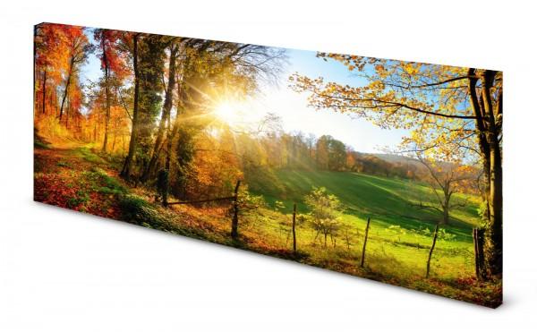 Magnettafel Pinnwand Bild Feldrand Waldrand Bäume Herbst gekantet
