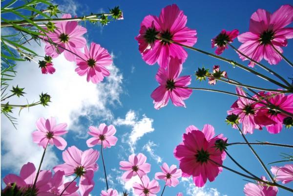 Magnettafel Pinnwand XXL Bild Sommer Blumen Wolken Himmel