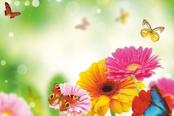 Magnettafel Pinnwand XXL Magnetbild bunte Blumen Schmetterling