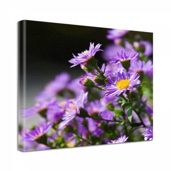 Leinwand Bild Natur & Blumen Astern in lila