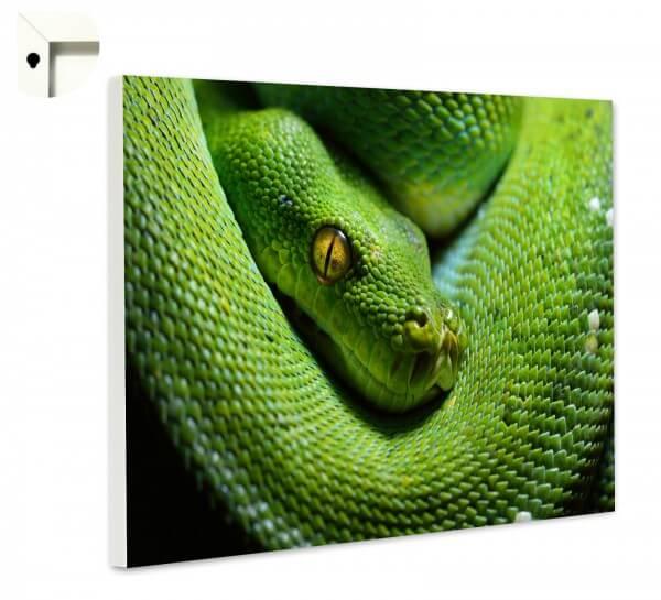 Magnettafel Pinnwand Memoboard Tiere Schlange grüne Mamba