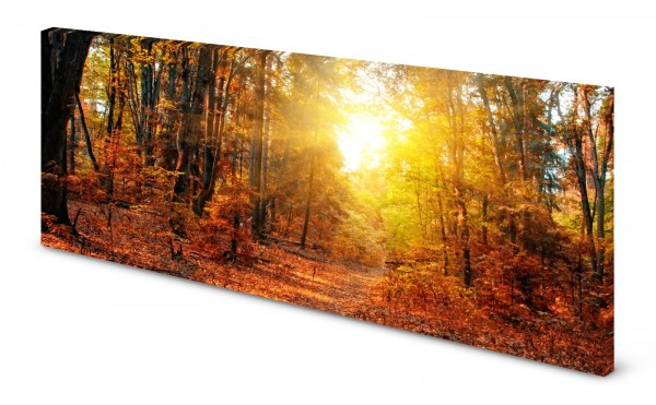 Magnettafel Pinnwand Bild Wald Herbst Lichtung gekantet