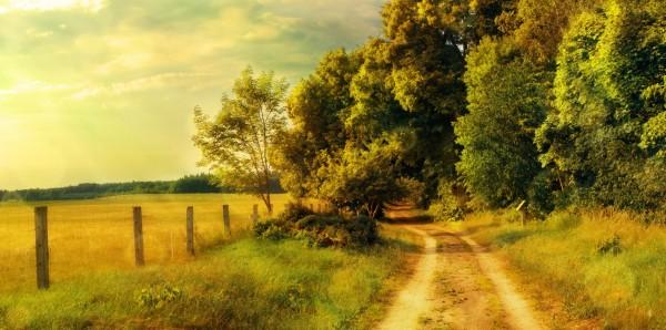 Magnettafel Pinnwand Bild XXL Panorama Natur Feldweg Feldrand