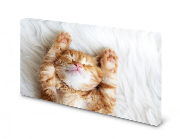 Magnettafel Pinnwand Bild Kätzchen Katze XXL gekantet