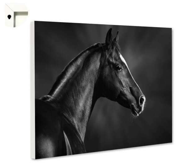 Magnettafel Pinnwand Tiere Pferd Fohlen