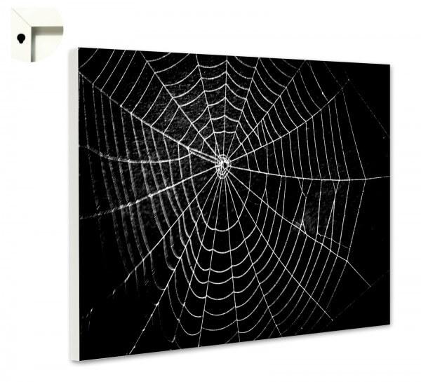 Magnettafel Pinnwand Memoboard Tiere Spinnennetz