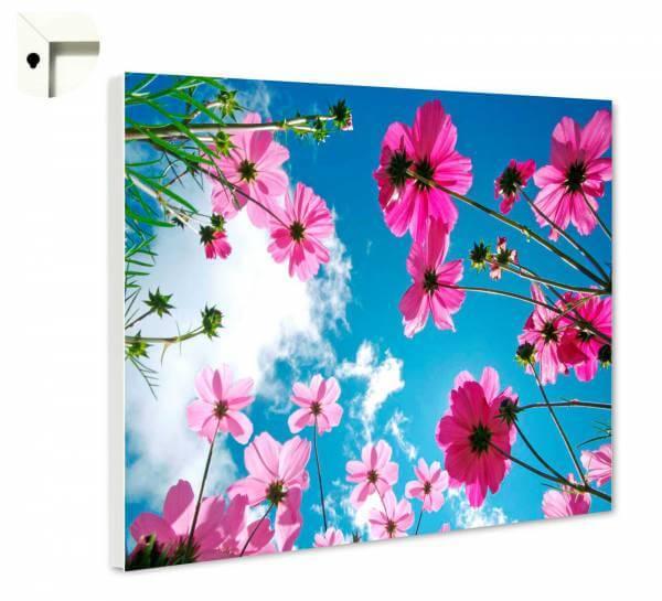 Magnettafel Pinnwand Natur Blumen im Sommerhimmel