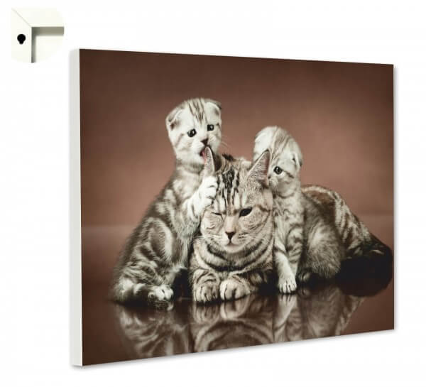 Magnettafel Pinnwand Tiere Katzen Mutter & Kinder
