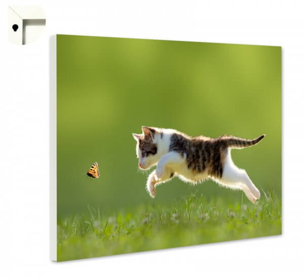 Magnettafel Pinnwand Memoboard Tiere Kleine Katze Schmetterling