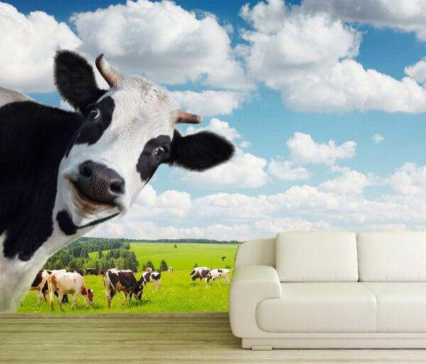 Vlies Tapete XXL Poster Fototapete Kuh Herde Holsteiner