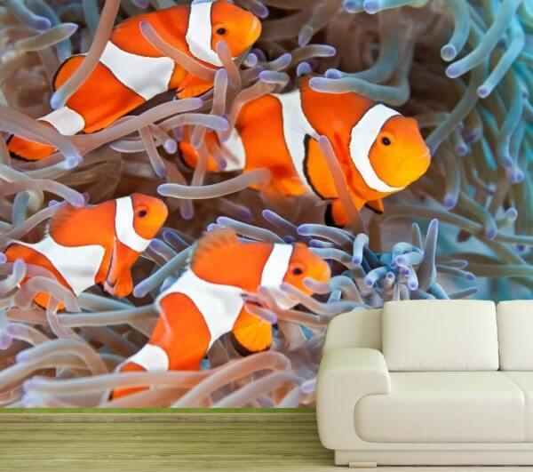 Vlies Tapete XXL Poster Fototapete Clownfisch Anemone
