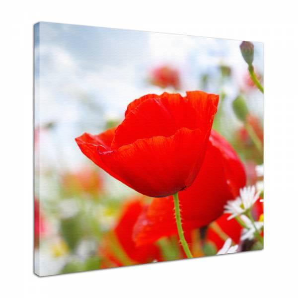 Leinwand Bild edel Blumen roter Mohn