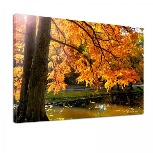 Leinwand Bild edel Natur Weiher im Herbst