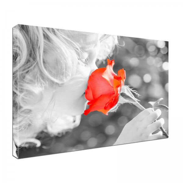 Leinwand Bild edel Blumen Duft rote Rose