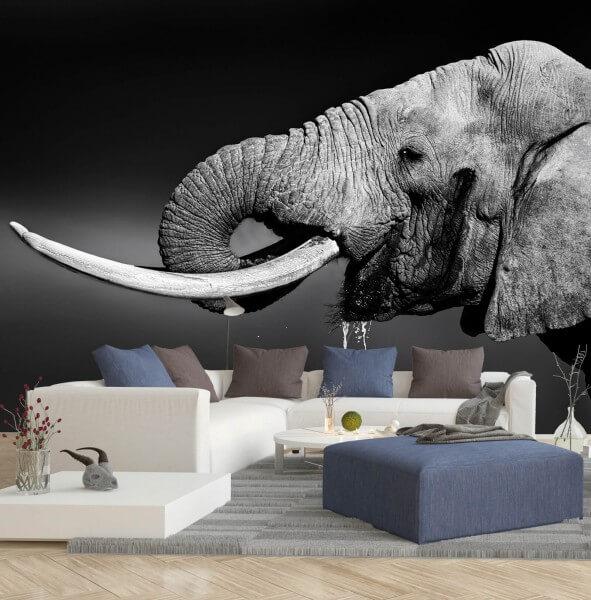 Vlies Tapete XXL Poster Fototapete Elefanten Baby