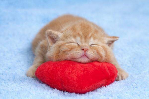 Magnettafel Pinnwand XXL Bild Babykatze Kitten Love