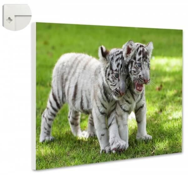 Magnettafel Pinnwand Tiger Baby weiß