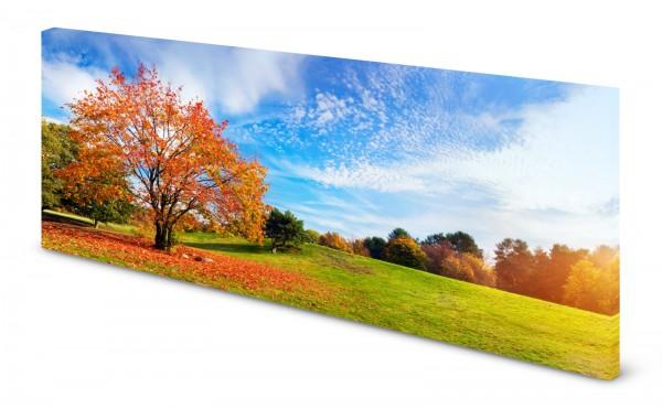 Magnettafel Pinnwand Bild Park Wiese Herbst Sonne gekantet