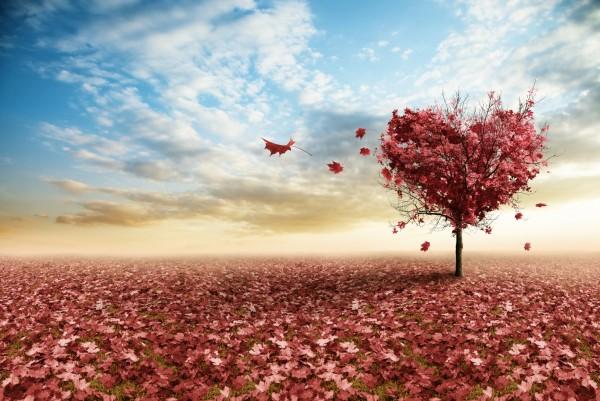 Magnettafel Pinnwand XXL Bild Natur Herz Baum Love