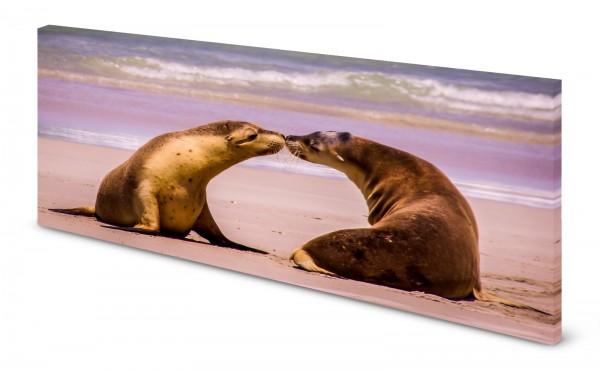 Magnettafel Pinnwand Bild Strand Seehund Seehunde Robbe gekantet