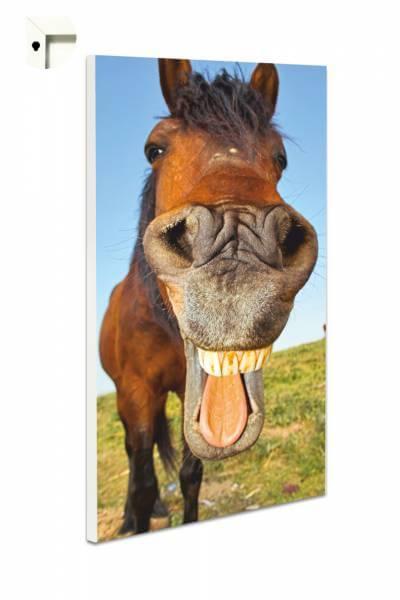 Magnettafel Pinnwand Tiere lachendes Pferd
