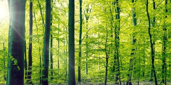 Magnettafel Pinnwand Bild XXL Panorama Natur Wald Bäume