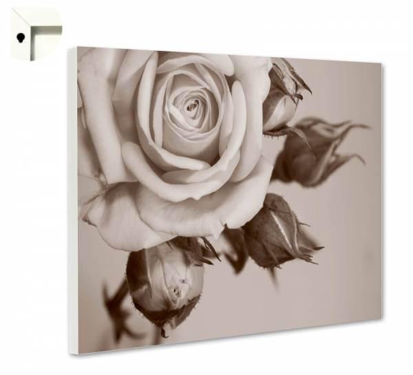 Magnettafel Pinnwand Blumen Natur Rose Knospe Vintage