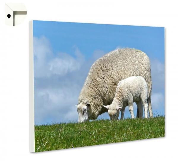 Magnettafel Pinnwand Natur Sylt Schafe