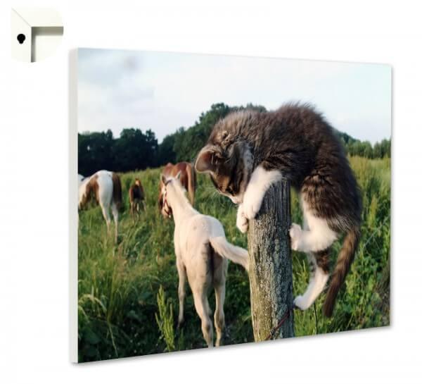 Magnettafel Pinnwand Memoboard Motiv Tiere Kleine Katze & Pferde