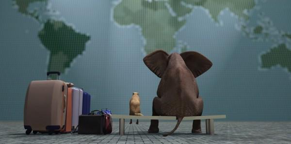Magnettafel Pinnwand Bild XXL Panorama Elefant Hund Weltreise