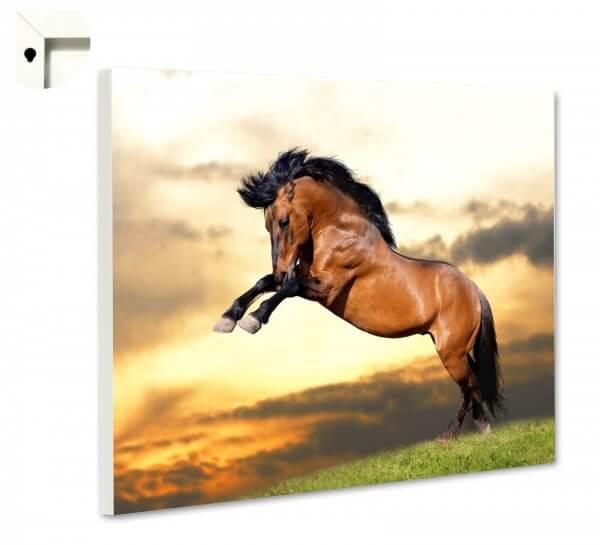 Magnettafel Pinnwand Tiere brauner Hengst Pferd