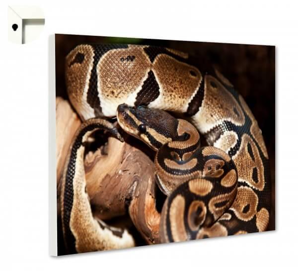Magnettafel Pinnwand Memoboard Tiere Schlange Python