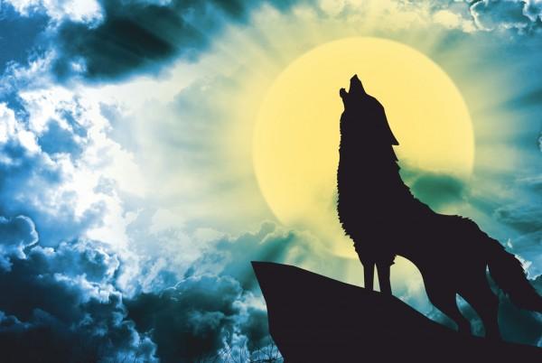 Magnettafel Pinnwand XXL Bild Wolf Vollmond